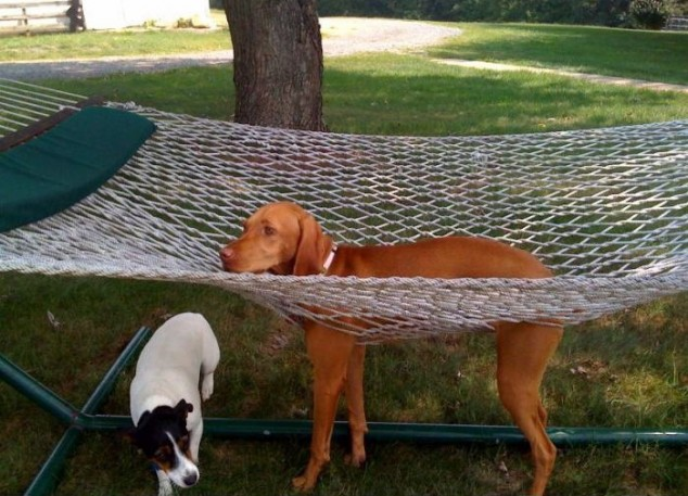 Dog-and-Hammock-634x457